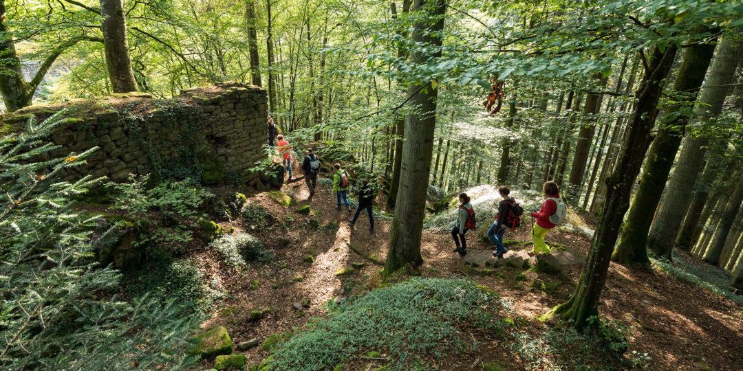 Bild: Die Schwarzwald-Guides im Naturpark Schwarzwald Mitte/Nord bieten ab dem 20. Juni wieder geführte Touren für Einheimische und Gäste an. Symbolfoto: Gerstner/compusign
