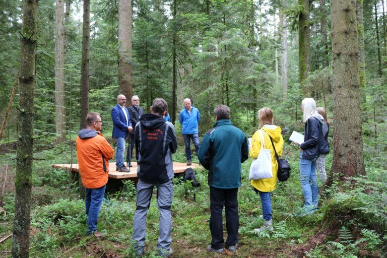 Die drei Plattformen im Loßburger Wald sind umgeben von Nadelbäumen und Heidelbeersträuchern. Foto: Naturpark Schwarzwald Mitte/Nord